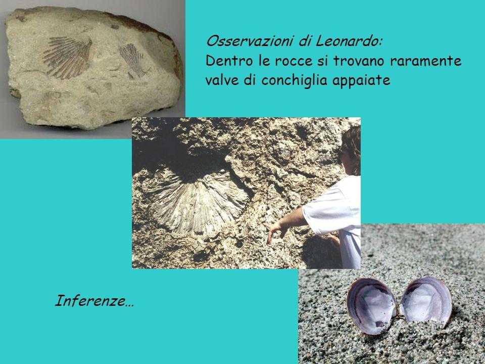 Osservazioni di Leonardo: Dentro le rocce si trovano raramente valve di conchiglia appaiate Inferenze…