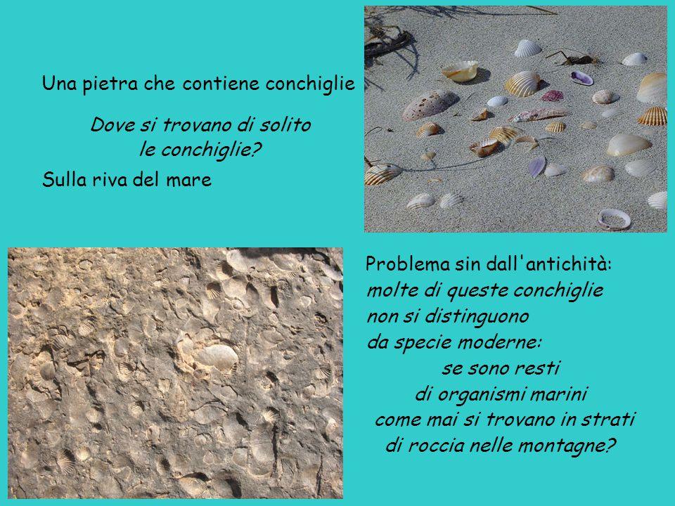 Una pietra che contiene conchiglie Dove si trovano di solito le conchiglie.