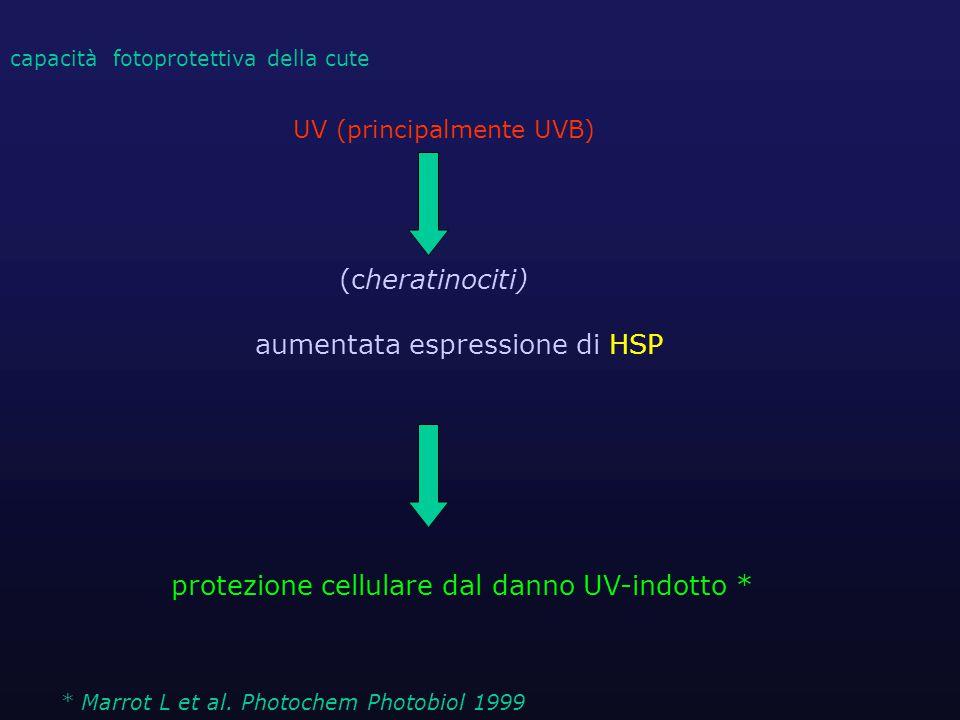 UV (principalmente UVB) (cheratinociti) aumentata espressione di HSP protezione cellulare dal danno UV-indotto * capacità fotoprotettiva della cute *