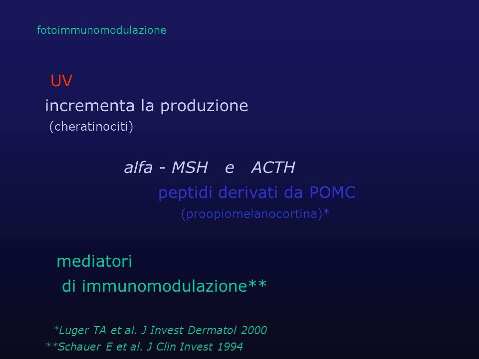 UV incrementa la produzione (cheratinociti) alfa - MSH e ACTH peptidi derivati da POMC (proopiomelanocortina)* mediatori di immunomodulazione** *Luger