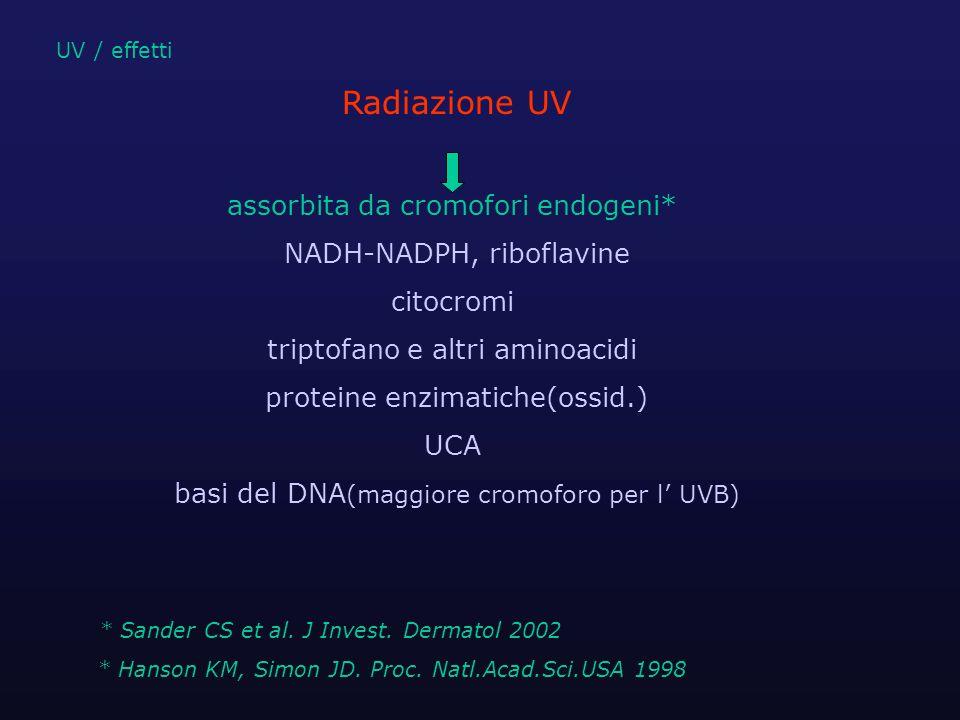 meccanismi di trasduzione del segnale UV-indotto UV agisce sulle strutture molecolari del citoplasma e membrane cellulari può direttamente attivare *:  recettori presenti sulla membrana cellulare  numerose chinasi  fattori di trascrizione,etc UV / effetti * Kulms D, Schwarz T.