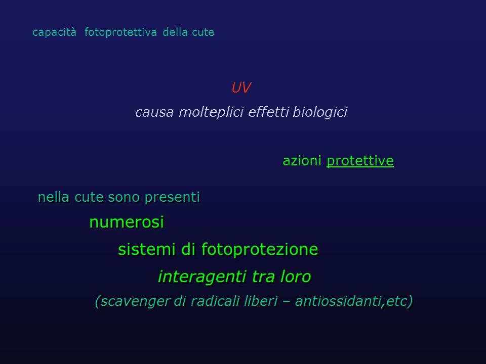 la formazione di cis-UCA è più alta nei soggetti a cute chiara fototipo I e II : elevata isomerizzazione e produzione cis-UCA rispetto a fototipo III e IV* * de Fine Olivarius F et al.