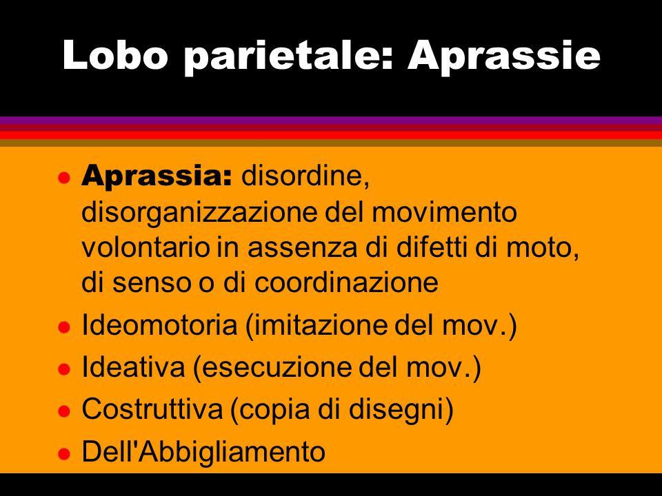 Lobo temporale - I  Analisi stimoli uditivi  Comprensione Linguistica (em.