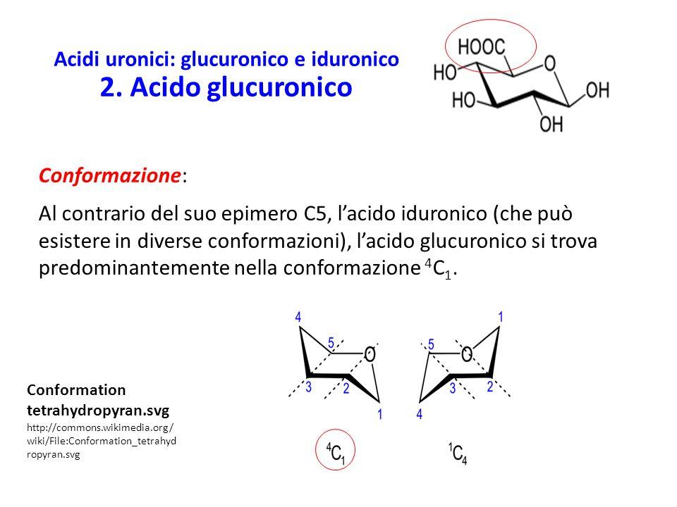 Acidi uronici: glucuronico e iduronico 2. Acido glucuronico Conformazione: Al contrario del suo epimero C5, l'acido iduronico (che può esistere in div