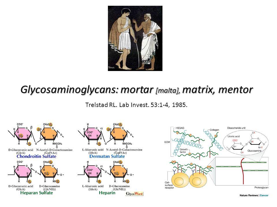 Glycosaminoglycans: mortar [malta], matrix, mentor Trelstad RL. Lab Invest. 53:1-4, 1985.