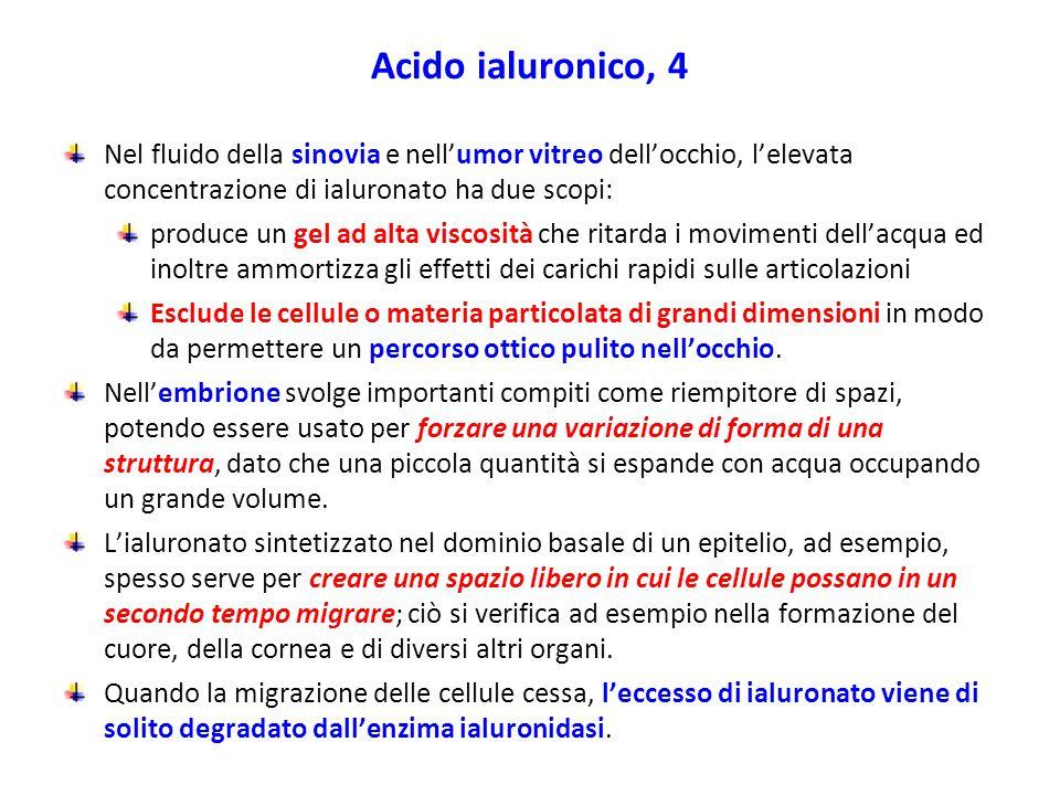 Acido ialuronico, 4 Nel fluido della sinovia e nell'umor vitreo dell'occhio, l'elevata concentrazione di ialuronato ha due scopi: produce un gel ad al