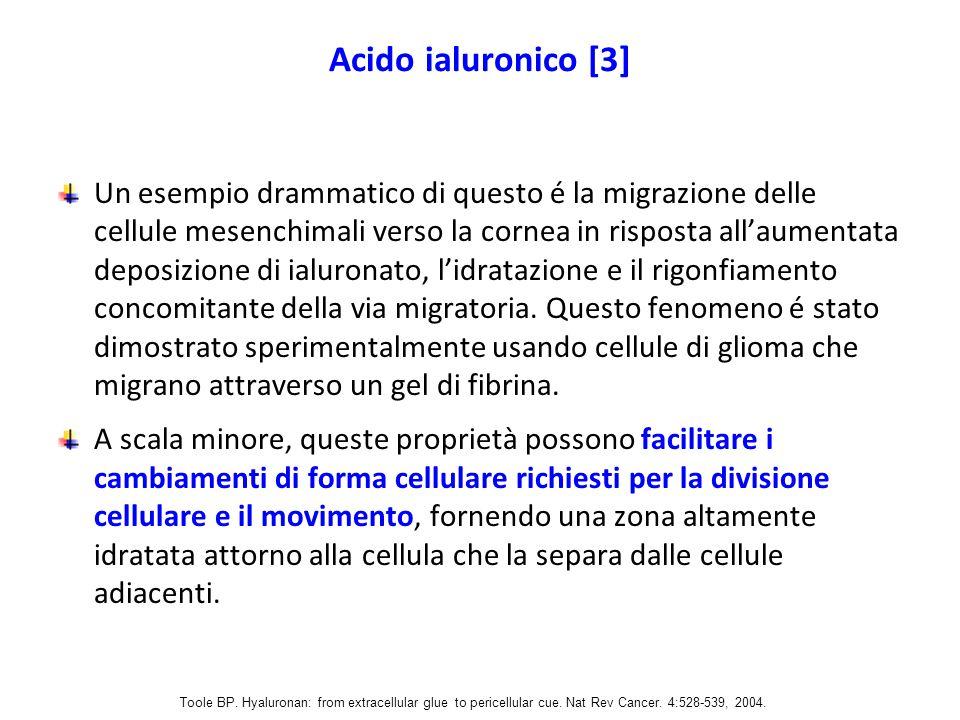 Acido ialuronico [3] Un esempio drammatico di questo é la migrazione delle cellule mesenchimali verso la cornea in risposta all'aumentata deposizione