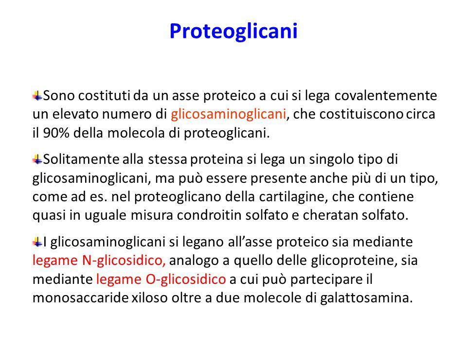 Proteoglicani Sono costituti da un asse proteico a cui si lega covalentemente un elevato numero di glicosaminoglicani, che costituiscono circa il 90%