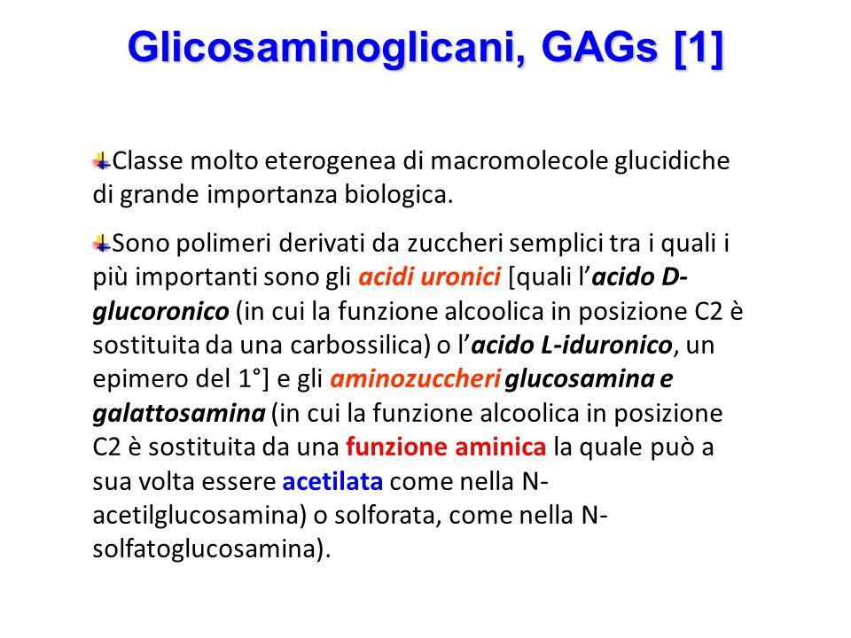 Glicosaminoglicani, GAGs [1] Classe molto eterogenea di macromolecole glucidiche di grande importanza biologica. Sono polimeri derivati da zuccheri se