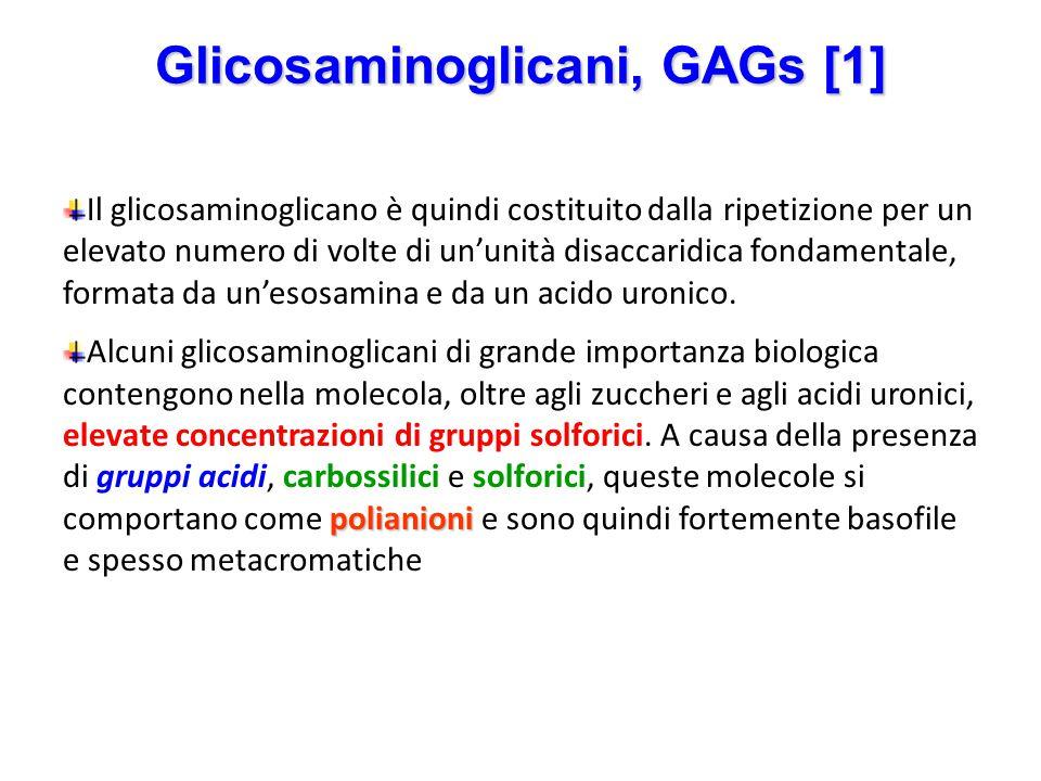 Glicosaminoglicani, GAGs [1] Il glicosaminoglicano è quindi costituito dalla ripetizione per un elevato numero di volte di un'unità disaccaridica fond