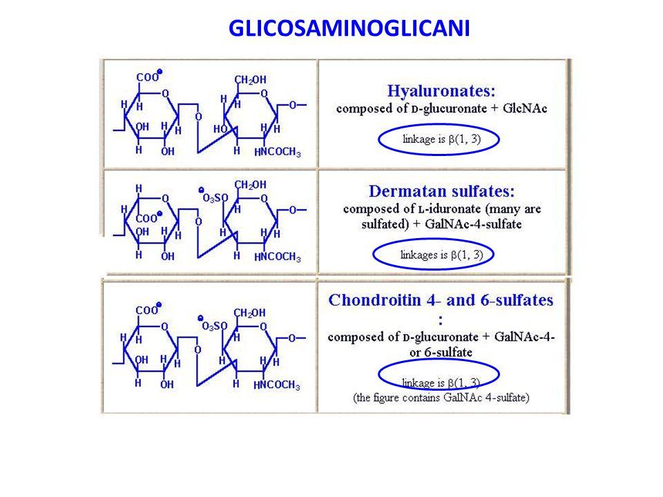 GLICOSAMINOGLICANI
