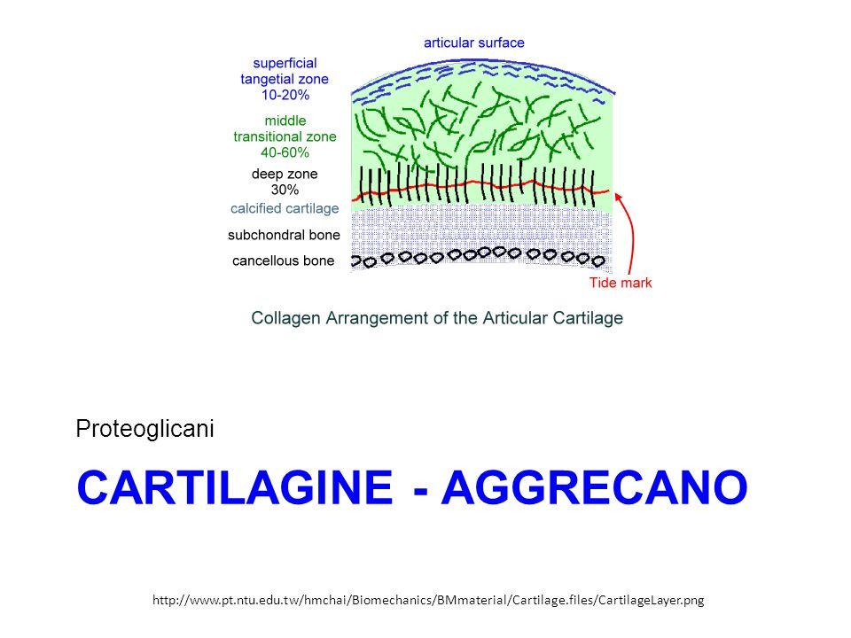 CARTILAGINE - AGGRECANO Proteoglicani http://www.pt.ntu.edu.tw/hmchai/Biomechanics/BMmaterial/Cartilage.files/CartilageLayer.png