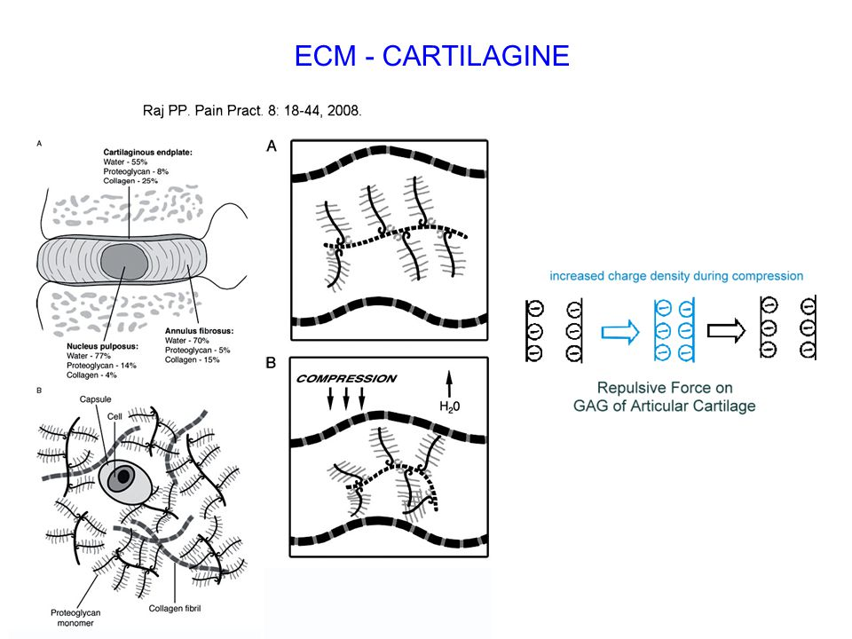ECM - CARTILAGINE