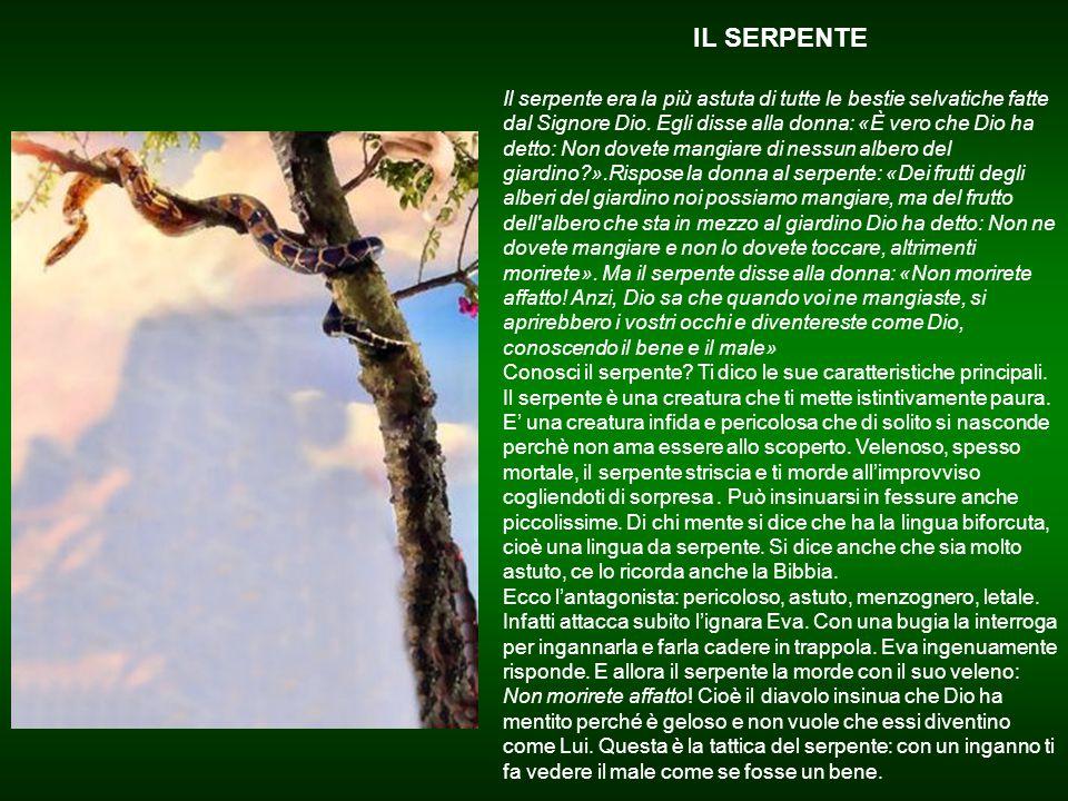 """UNO STRANO ALBERO """"Il Signore Dio fece germogliare dal suolo ogni sorta di alberi graditi alla vista e buoni da mangiare, tra cui l'albero della vita"""