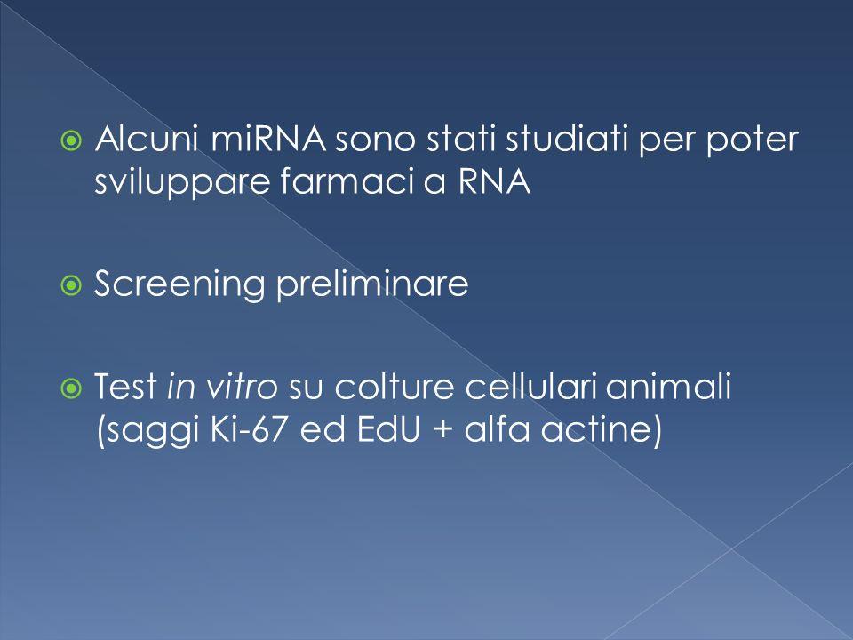  Alcuni miRNA sono stati studiati per poter sviluppare farmaci a RNA  Screening preliminare  Test in vitro su colture cellulari animali (saggi Ki-67 ed EdU + alfa actine)