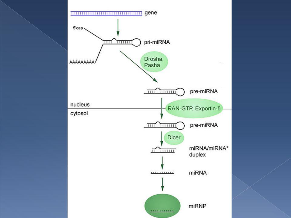  Biomarcatori  Indici dell'espressione genica a livello cellulare (pattern d'espressione)  Regolatori delle funzioni biologiche in vivo