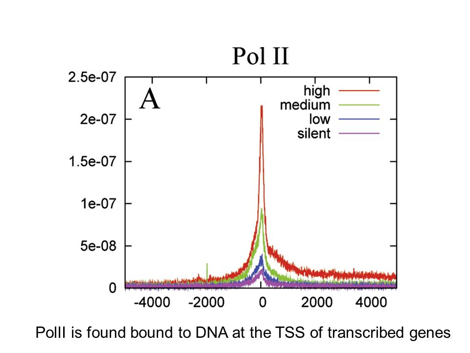 PolII is found bound to DNA at the TSS of transcribed genes