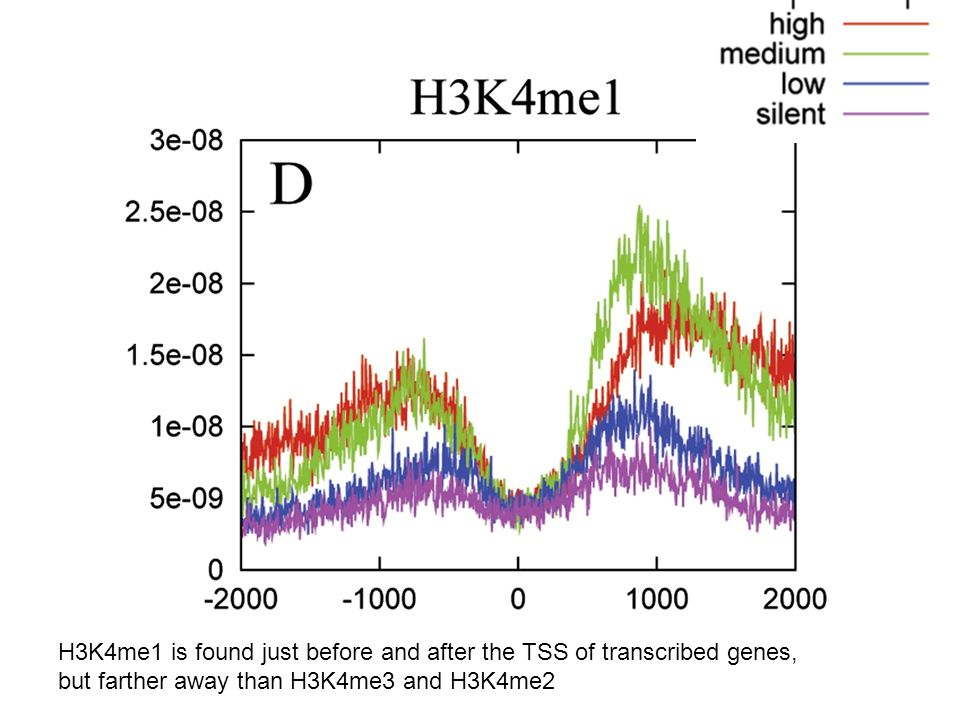 H3K4me1 is found just before and after the TSS of transcribed genes, but farther away than H3K4me3 and H3K4me2