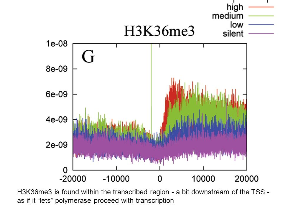 "H3K36me3 is found within the transcribed region - a bit downstream of the TSS - as if it ""lets"" polymerase proceed with transcription"