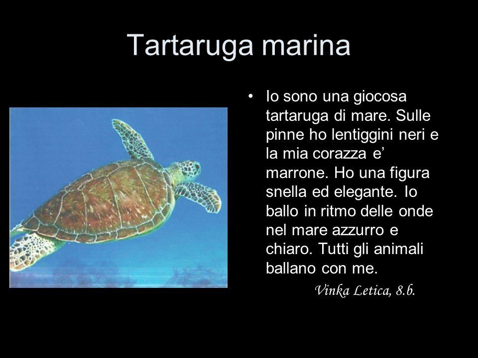 Tartaruga marina Io sono una giocosa tartaruga di mare. Sulle pinne ho lentiggini neri e la mia corazza e' marrone. Ho una figura snella ed elegante.