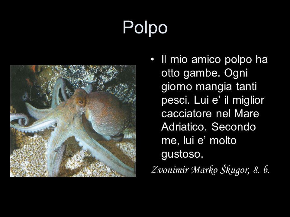 Polpo Il mio amico polpo ha otto gambe. Ogni giorno mangia tanti pesci. Lui e' il miglior cacciatore nel Mare Adriatico. Secondo me, lui e' molto gust
