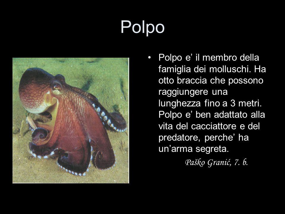 Polpo Polpo e' il membro della famiglia dei molluschi. Ha otto braccia che possono raggiungere una lunghezza fino a 3 metri. Polpo e' ben adattato all