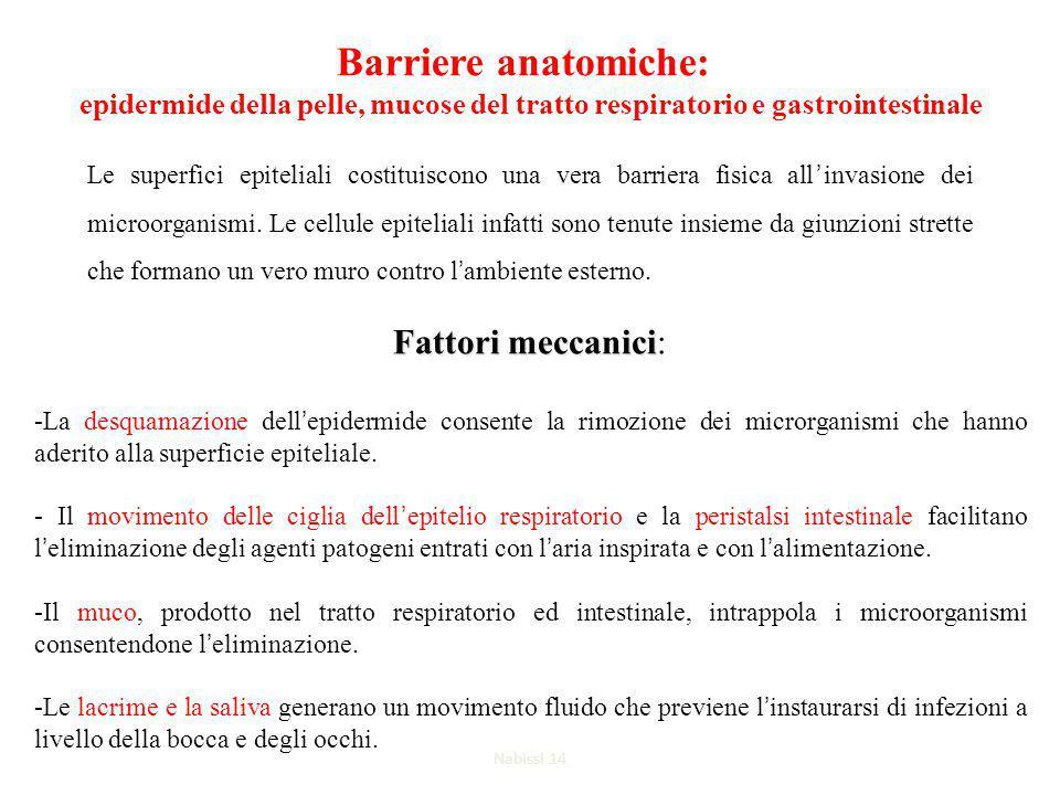 Barriere anatomiche: epidermide della pelle, mucose del tratto respiratorio e gastrointestinale Le superfici epiteliali costituiscono una vera barriera fisica all'invasione dei microorganismi.