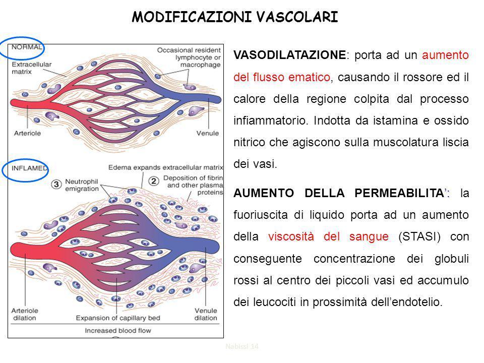 MODIFICAZIONI VASCOLARI VASODILATAZIONE: porta ad un aumento del flusso ematico, causando il rossore ed il calore della regione colpita dal processo infiammatorio.