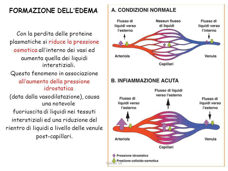 FORMAZIONE DELL'EDEMA Con la perdita delle proteine plasmatiche si riduce la pressione osmotica all'interno dei vasi ed aumenta quella dei liquidi interstiziali.