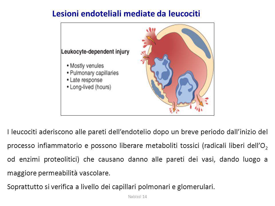 I leucociti aderiscono alle pareti dell'endotelio dopo un breve periodo dall'inizio del processo infiammatorio e possono liberare metaboliti tossici (radicali liberi dell'O 2 od enzimi proteolitici) che causano danno alle pareti dei vasi, dando luogo a maggiore permeabilità vascolare.