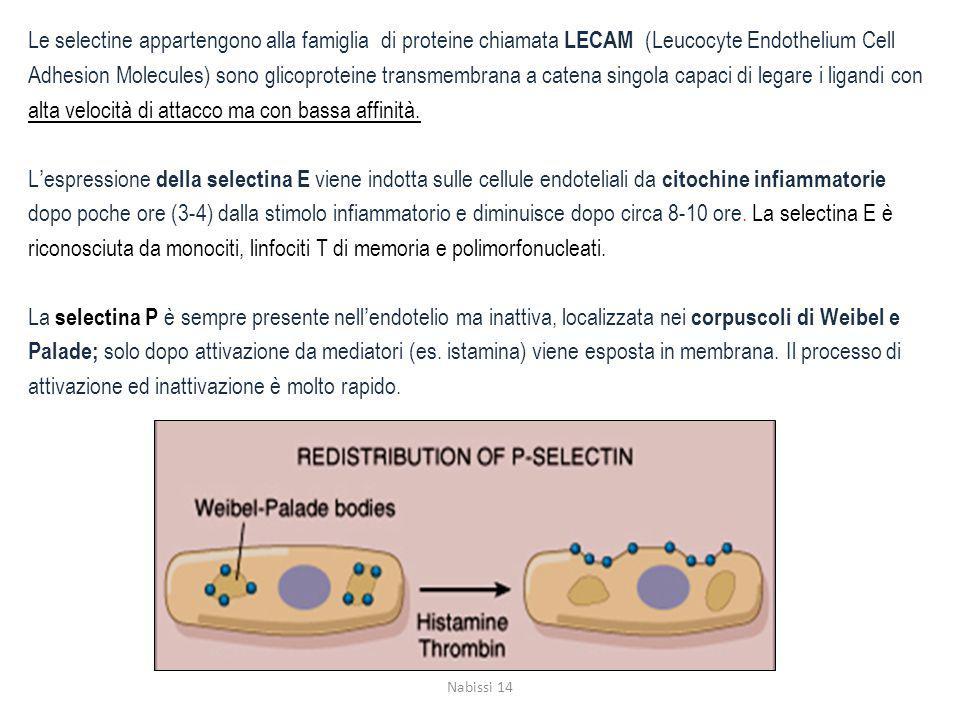 Le selectine appartengono alla famiglia di proteine chiamata LECAM (Leucocyte Endothelium Cell Adhesion Molecules) sono glicoproteine transmembrana a catena singola capaci di legare i ligandi con alta velocità di attacco ma con bassa affinità.