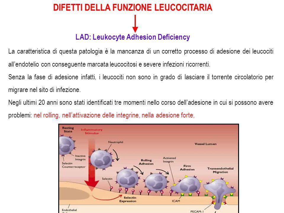 DIFETTI DELLA FUNZIONE LEUCOCITARIA LAD: Leukocyte Adhesion Deficiency Nabissi 14 La caratteristica di questa patologia è la mancanza di un corretto processo di adesione dei leucociti all'endotelio con conseguente marcata leucocitosi e severe infezioni ricorrenti.