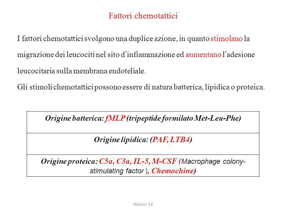 Fattori chemotattici I fattori chemotattici svolgono una duplice azione, in quanto stimolano la migrazione dei leucociti nel sito d'infiammazione ed aumentano l'adesione leucocitaria sulla membrana endoteliale.