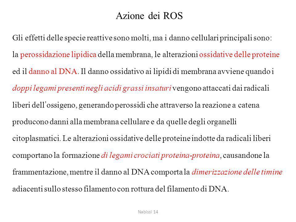 Azione dei ROS Gli effetti delle specie reattive sono molti, ma i danno cellulari principali sono: la perossidazione lipidica della membrana, le alterazioni ossidative delle proteine ed il danno al DNA.