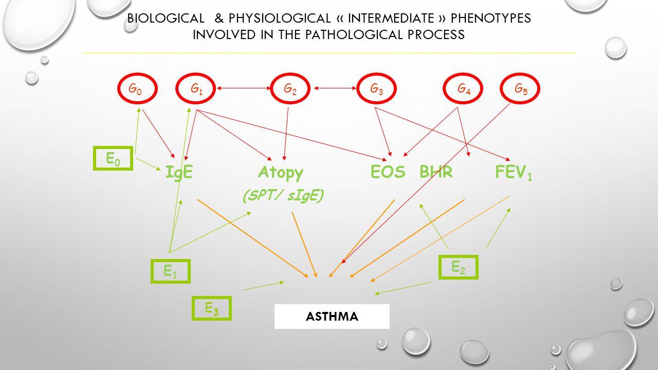 Fenotipo Eosinofilo L'eosinofilia nell'espettorato permette  di valutare il controllo dell'infiammazione bronchiale nell'asma (Gibson, 2003; Deykin,)  di predire la perdita di controllo dell'asma (Jatakanon, 2000)  di predire la risposta a breve termine alla terapia con CS inalatori (Pavord, 1999; Bacci, 2006; Berry, 2007) Fenotipo Neutrofilo La neutrofilia nell'espettorato può essere osservata in alcuni particolari condizioni  riacutizzazioni asmatiche (specie quelle a rapida insorgenza)  asma grave  esposizione a endotossine, inquinanti atmosferici, agenti professionali Floriana 12 anni, Qual'è il suo fenotipo?
