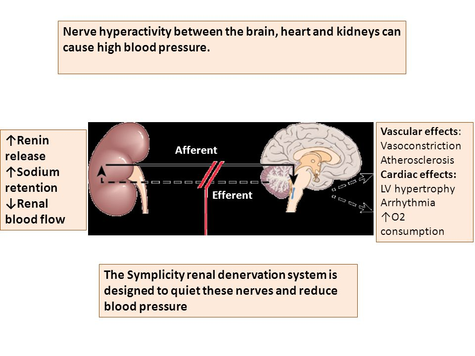Afferent Efferent ↑Renin release ↑Sodium retention ↓Renal blood flow Vascular effects: Vasoconstriction Atherosclerosis Cardiac effects: LV hypertrophy Arrhythmia ↑O2 consumption Nerve hyperactivity between the brain, heart and kidneys can cause high blood pressure.