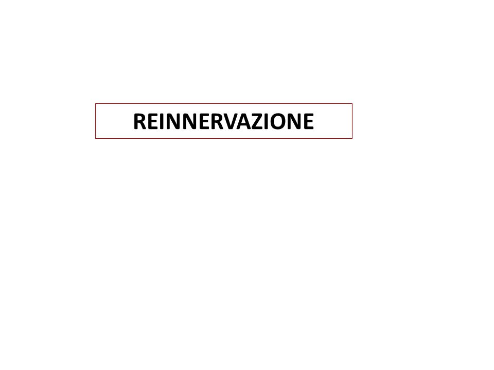 In normotensive rats, reinnervation of the renal sensory nerves occurs over the same time course as reinnervation of the renal sympathetic nerves, both being complete at 9 to 12 wk following renal denervation.