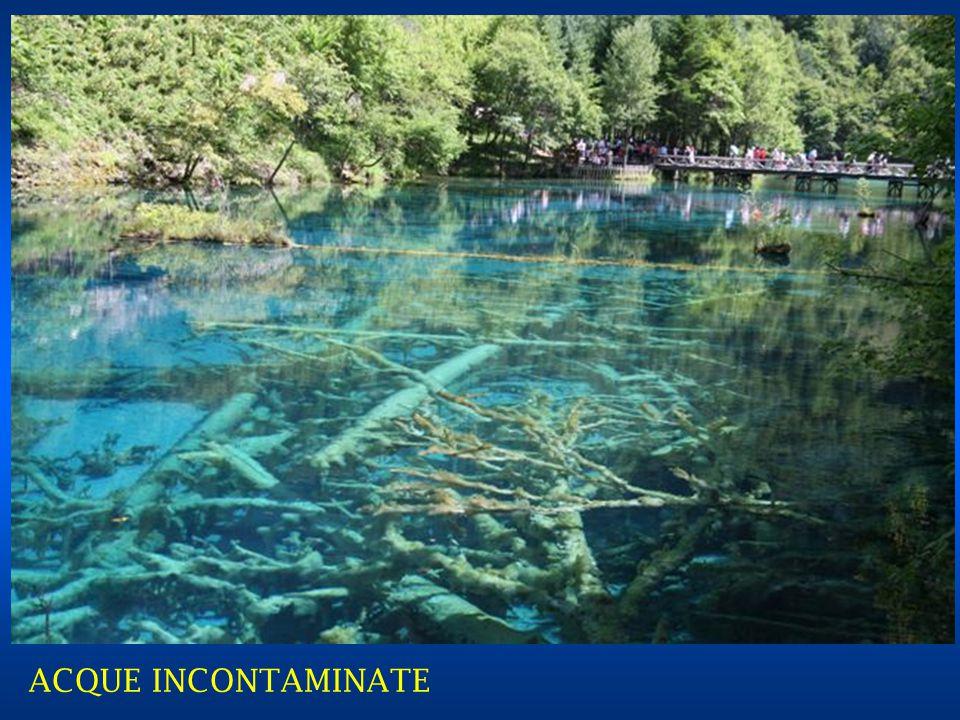 ELEGANTE SIGNORA TIBETANA CINESINA ALLA PAGE