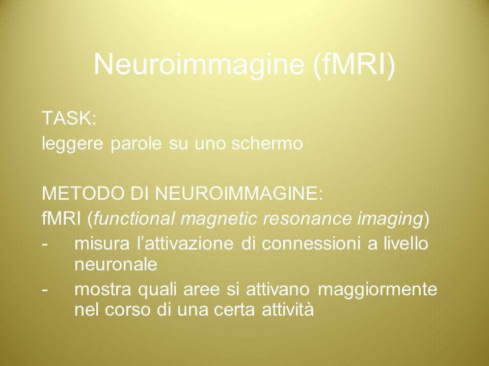 Neuroimmagine (fMRI) TASK: leggere parole su uno schermo METODO DI NEUROIMMAGINE: fMRI (functional magnetic resonance imaging) -misura l'attivazione d