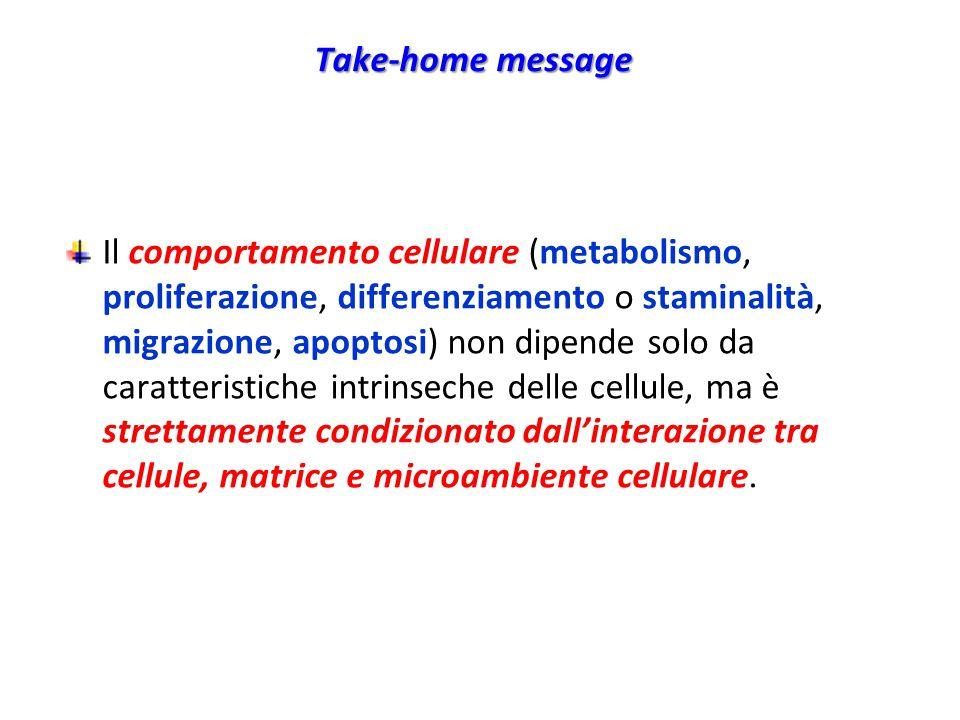 Take-home message Il comportamento cellulare (metabolismo, proliferazione, differenziamento o staminalità, migrazione, apoptosi) non dipende solo da caratteristiche intrinseche delle cellule, ma è strettamente condizionato dall'interazione tra cellule, matrice e microambiente cellulare.