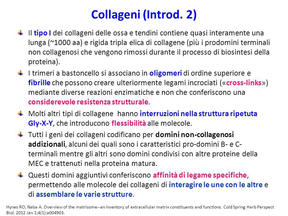 Collageni (Introd.
