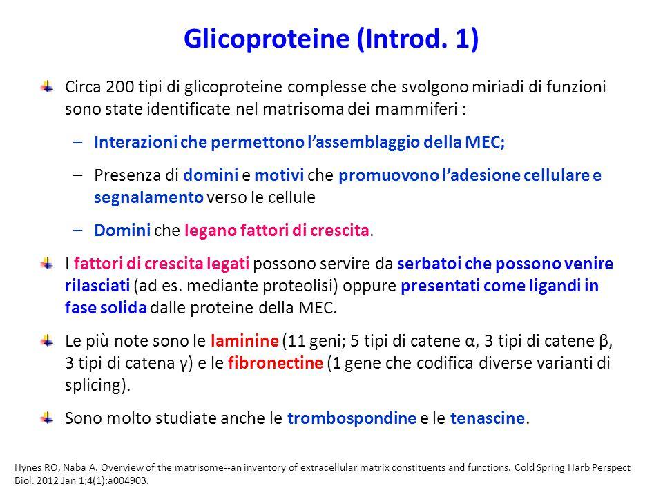Glicoproteine (Introd.