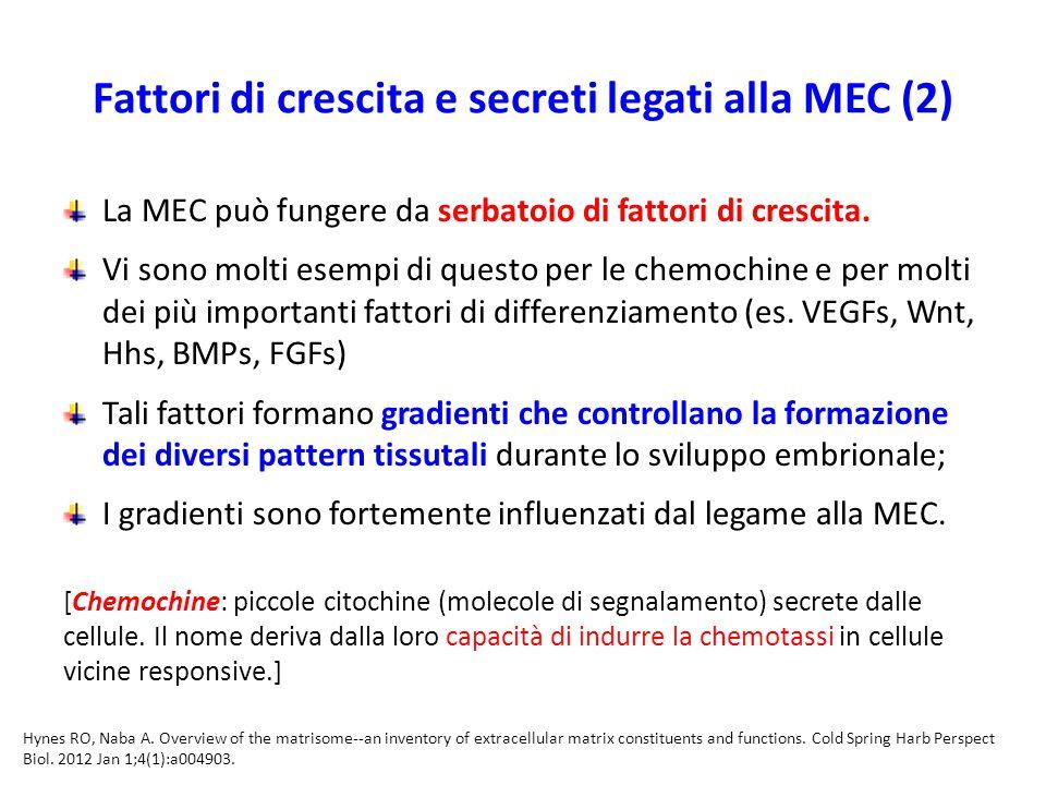 Fattori di crescita e secreti legati alla MEC (2) La MEC può fungere da serbatoio di fattori di crescita.