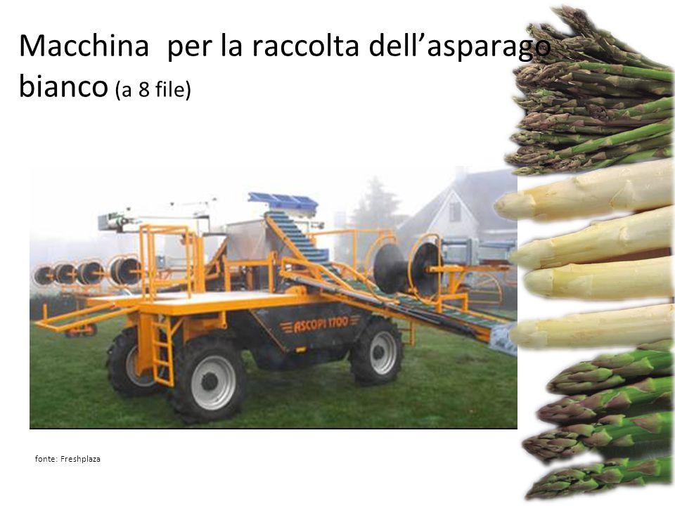fonte: Freshplaza Macchina per la raccolta dell'asparago bianco (a 8 file)