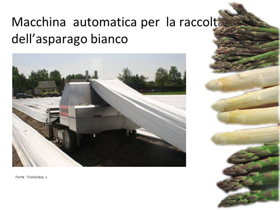 Macchina automatica per la raccolta dell'asparago bianco Fonte : freshplaza. s
