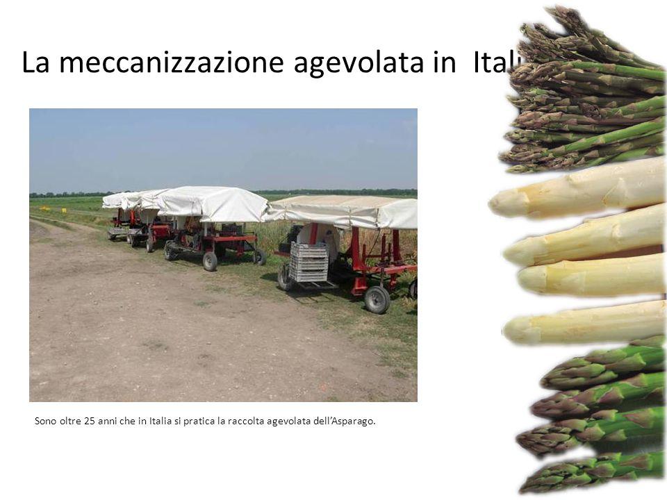 Sono oltre 25 anni che in Italia si pratica la raccolta agevolata dell'Asparago. La meccanizzazione agevolata in Italia