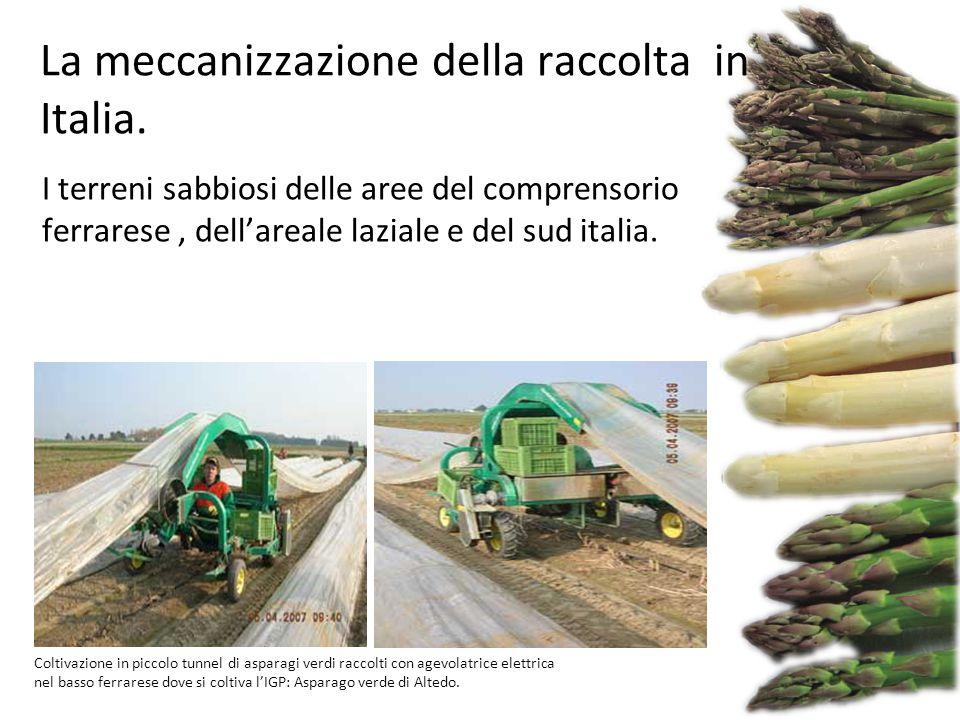 I terreni sabbiosi delle aree del comprensorio ferrarese, dell'areale laziale e del sud italia. Coltivazione in piccolo tunnel di asparagi verdi racco