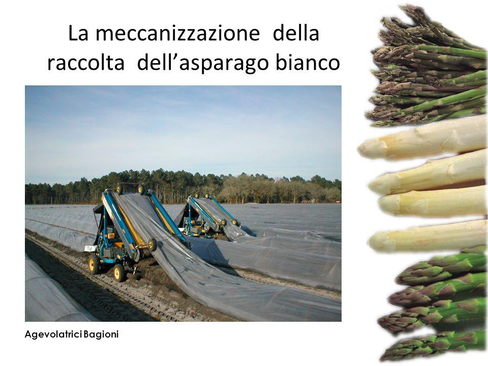 La meccanizzazione della raccolta dell'asparago bianco Agevolatrici Bagioni