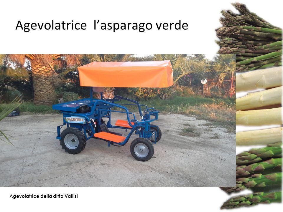 Agevolatrice l'asparago verde Agevolatrice della ditta Vallisi
