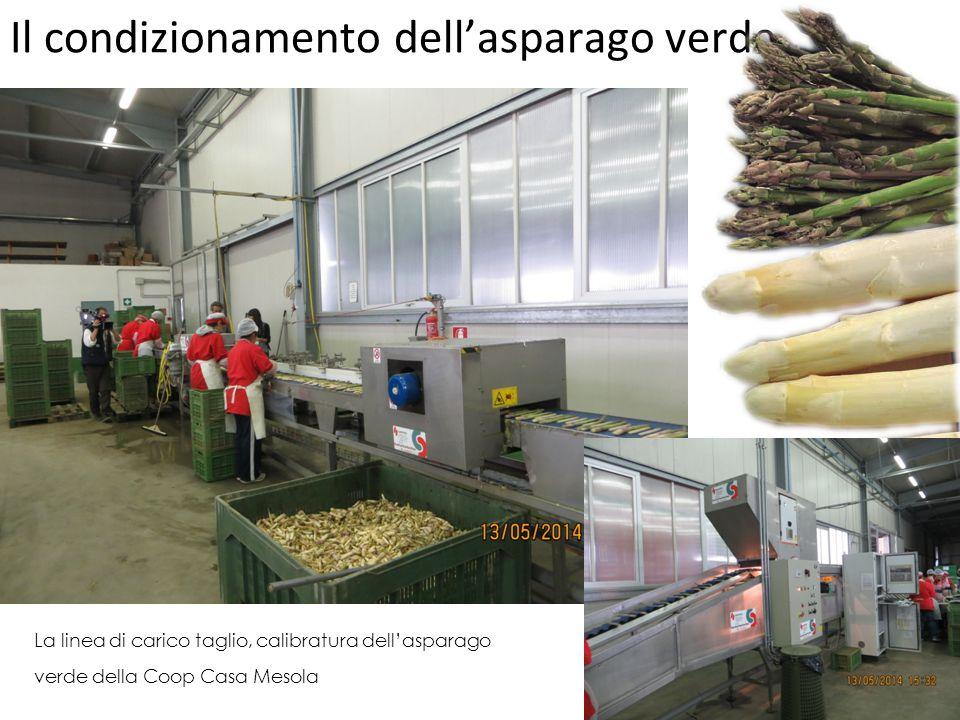 Il condizionamento dell'asparago verde La linea di carico taglio, calibratura dell'asparago verde della Coop Casa Mesola